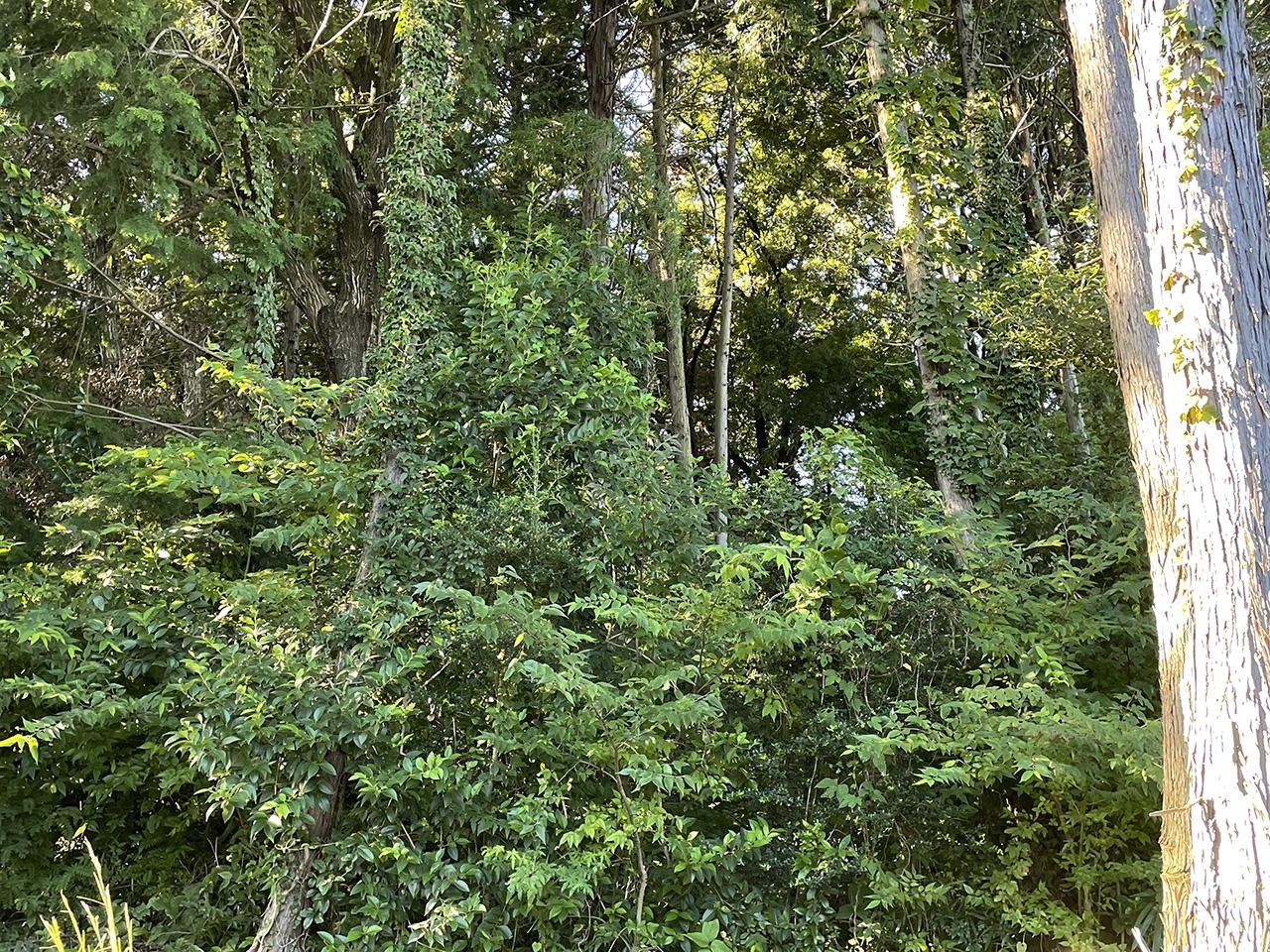 深見歴史の森の山道の木々