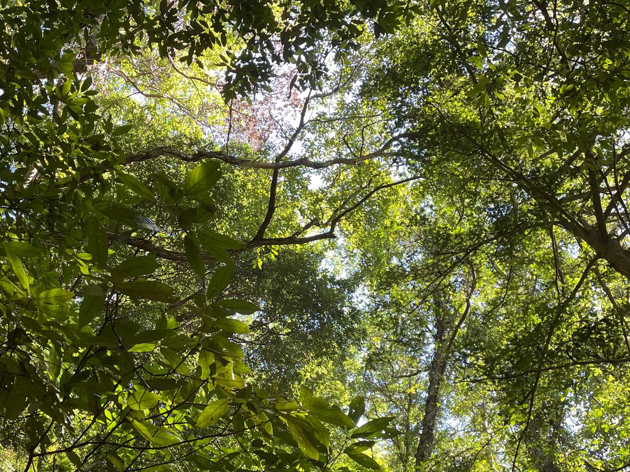 津久井城山の山道の木々