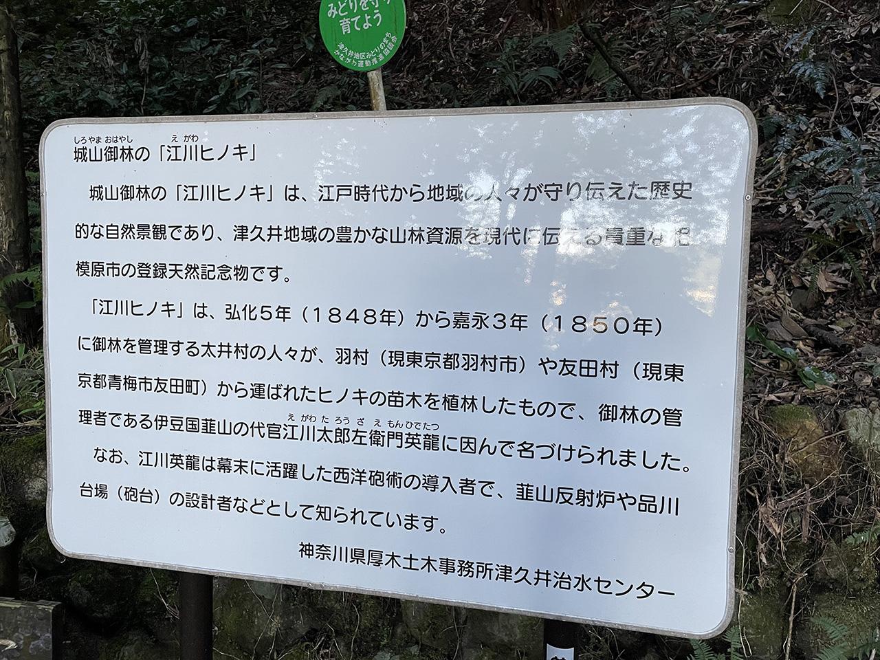 城山御林「江川ヒノキ」