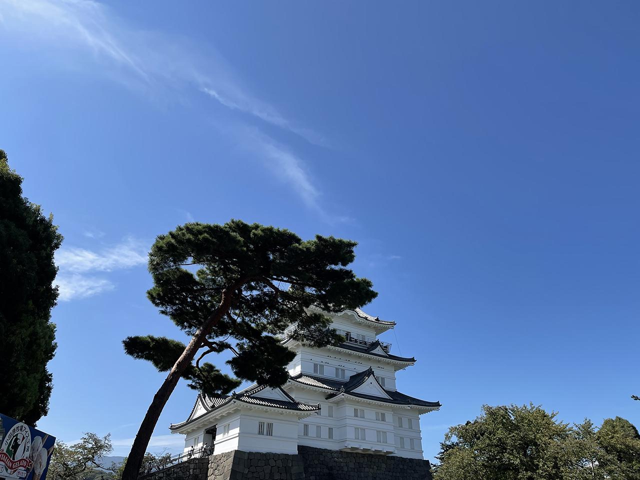 小田原城の松と天守閣