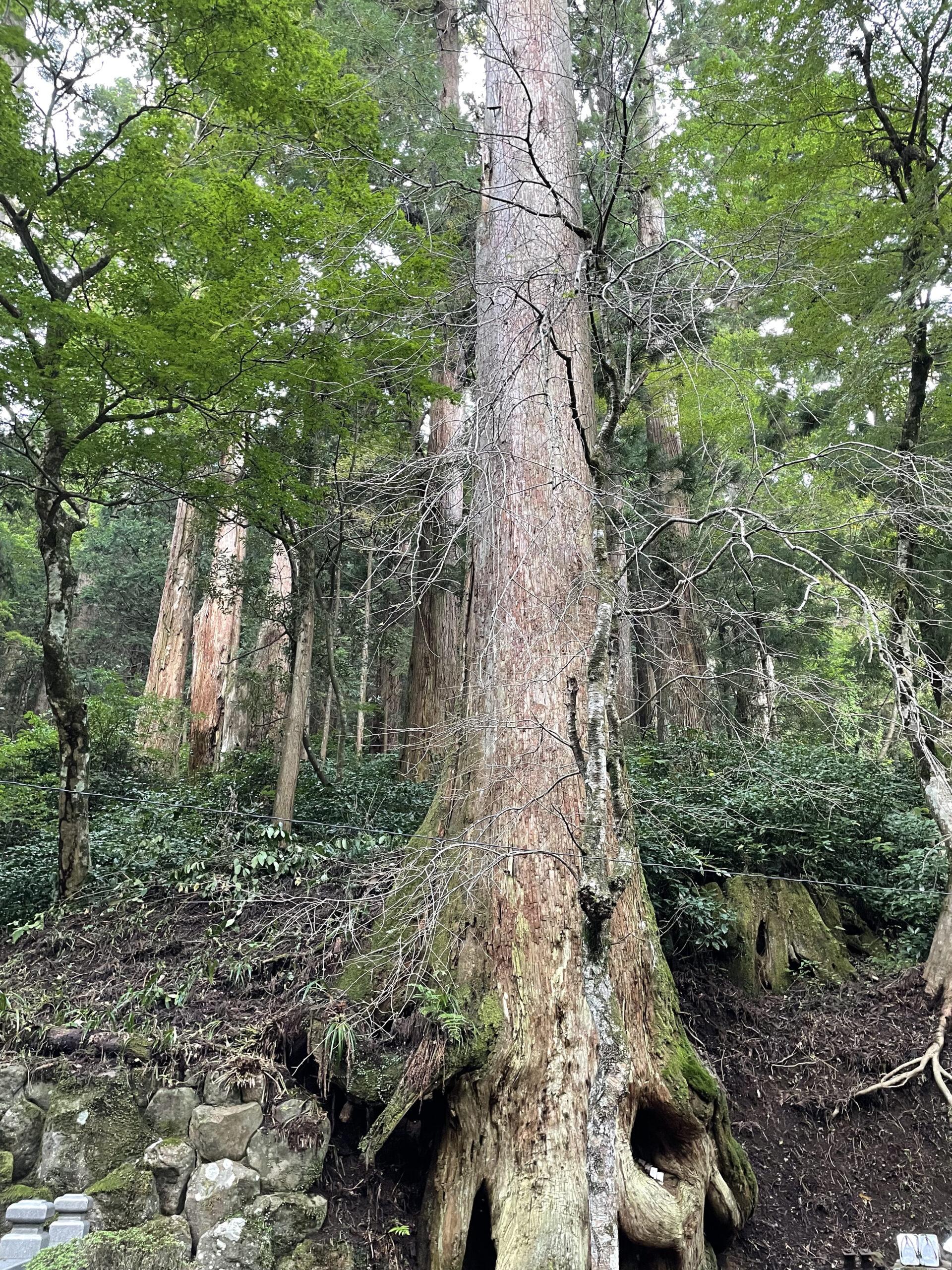 最乗寺の木と階段