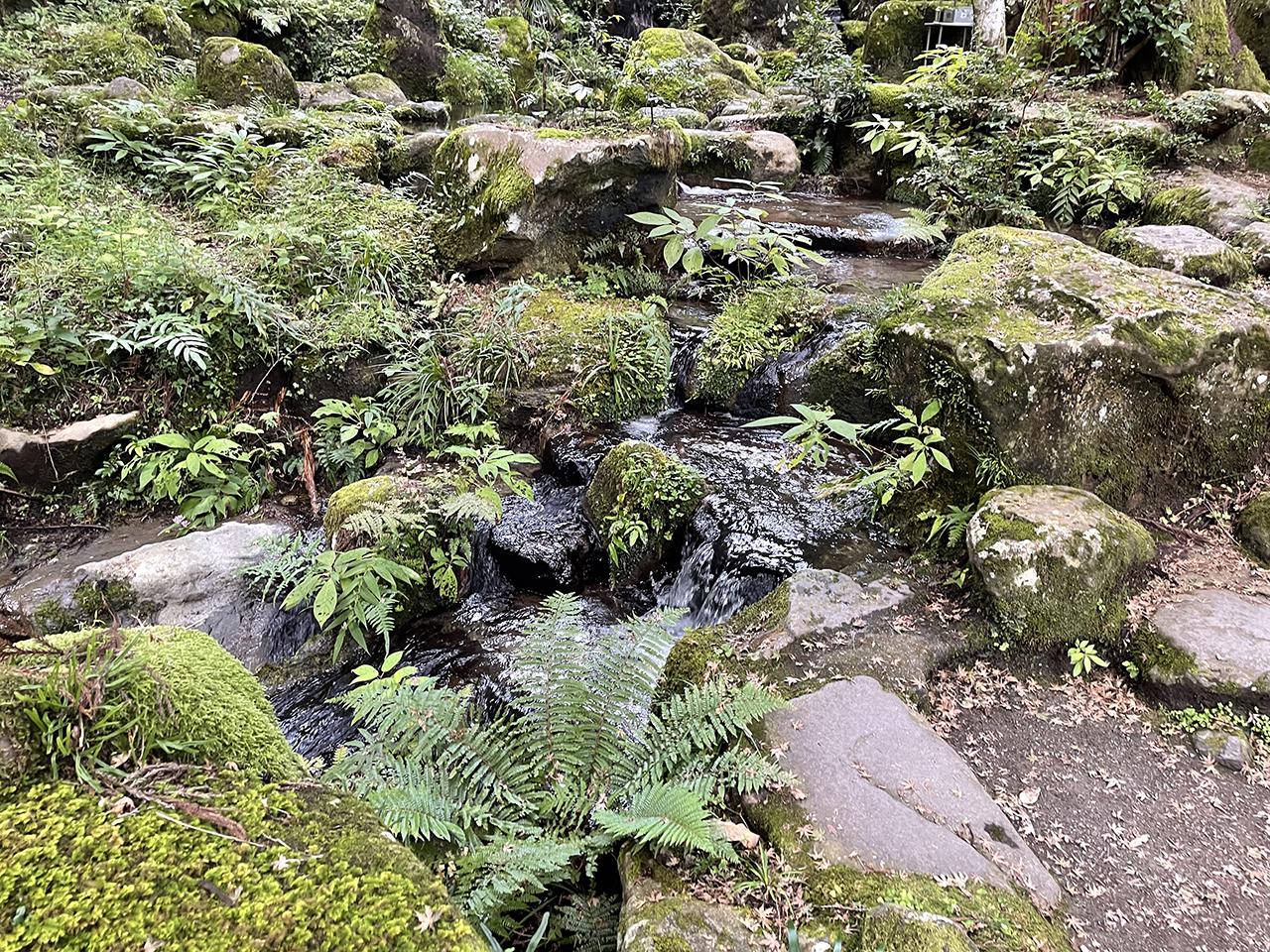 最乗寺の自然