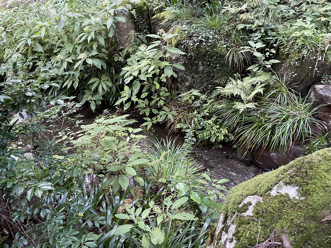 最乗寺の小川